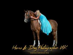 The Horse & Dog Photographer Herefordshire UK
