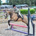 Matty - Stunning 12.2hh Pony Club Pony for confident child