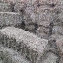 Small square bale hay