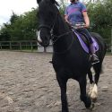 Marlow 9 15.3hh section D gelding for long term loan