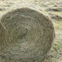 Lovely Round Bale Horse Hay - Delivery Available - Based Kington Area.