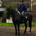 Beautiful 16.2 Friesian x Cob Black Gelding, 24 years old but plenty of mileage left
