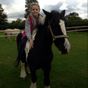13 hh coloured cob 19 yrs old