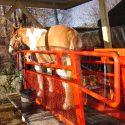 Nearly new equine treadmill