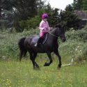 14.2hh pony for full loan