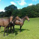 Cilwych Farm Holiday horse livery