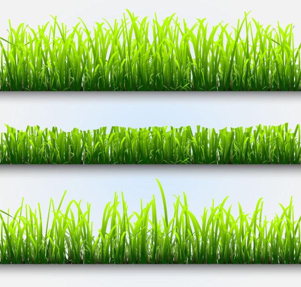 Palabras claves csped plantas material de vectores Free Download