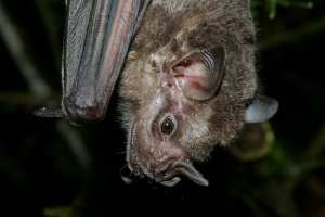 Poop Core records 4,300 years of bat and environmental nutrition – HeritageDaily