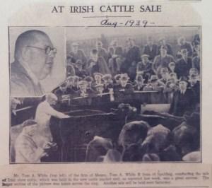 AOS P 1369 Irish Cattle Sale