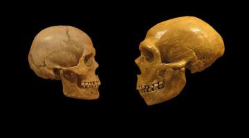 Neandertal insan neden tükendi, Homo sapiens neden ayakta kaldı?
