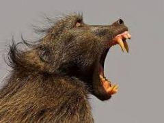 hls-efs-csc-baboon