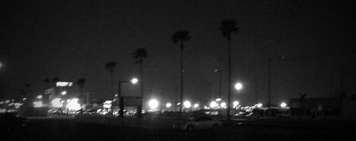 valley plam trees at night