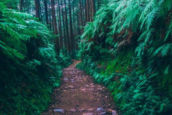 Japan_Trail4-1600px-medium