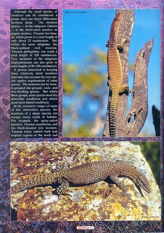 reptilia50