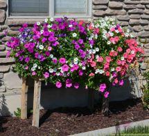 Pallet Planter Box Cascading Flowers - Tool Belt