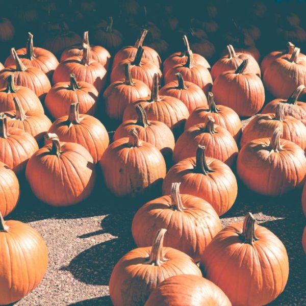 8 Reasons Fall is Our Favorite Season