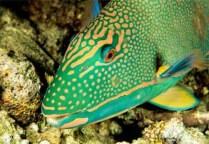 Balıkların özellikleri
