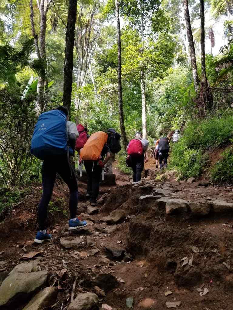 Pendakian Gunung Gede: Putri Lintas Cibodas - Menuju Surya Kencana (2/3) Jalur Gunung Putri Gunung Gede 3