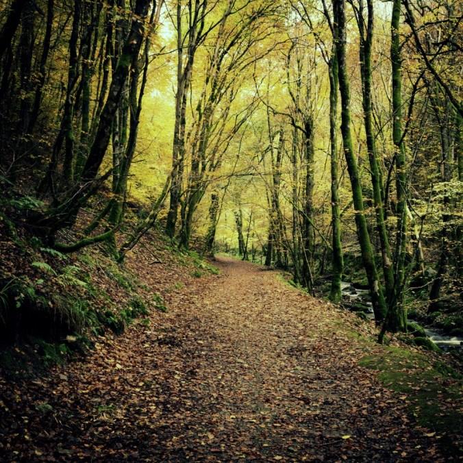 Woods_of_birnam_flickr cc Andrew DeCandis