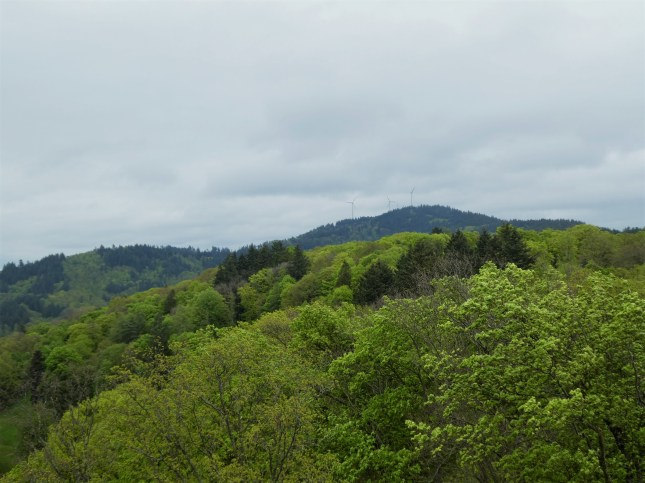 Black Forest Freiburg Germany Lookout