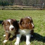 twopuppies