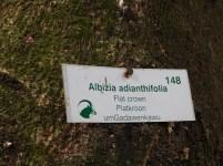 Bendigo Nature Reserve indigenous tree markers