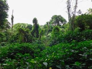 Bendigo Nature Reserve