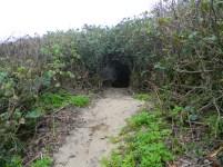 Entrance of the path through the bush