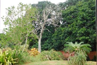 Die dooie boom in die diep donker bos
