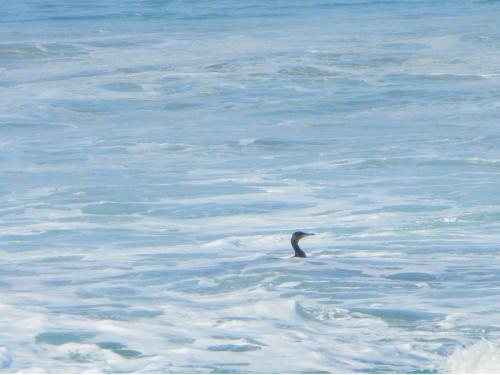 Diver fishing Elysium Beach