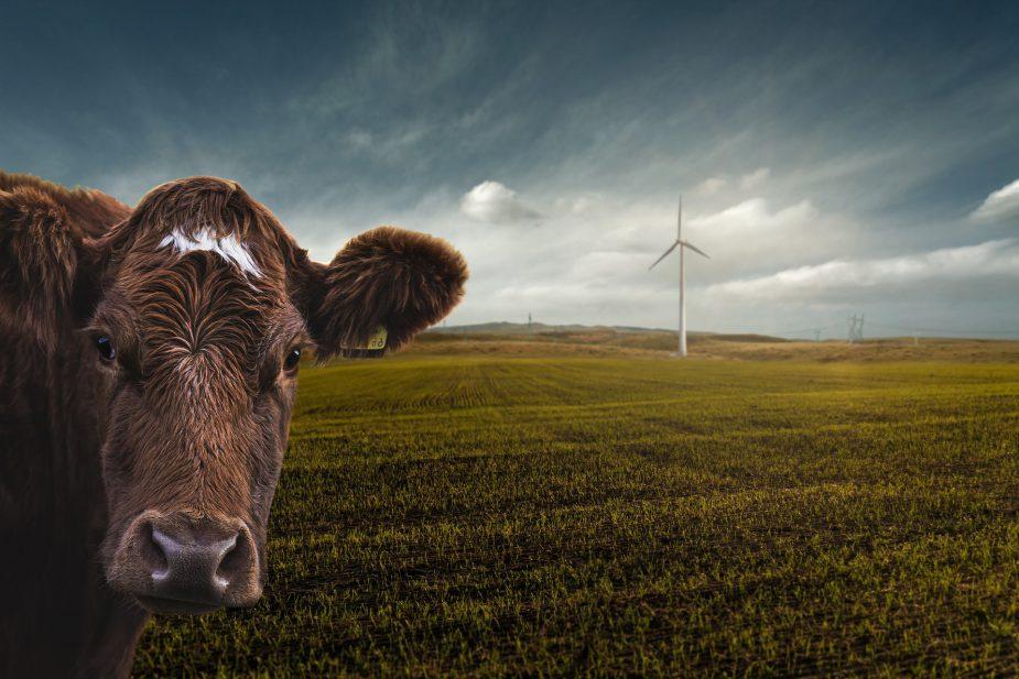 Redenen om veganist te worden #2 Het Milieu