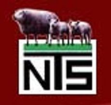 logo van stamboek NTS