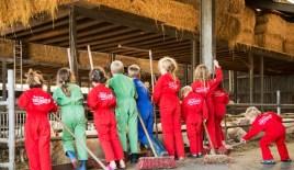 Lezersactie Het Schaap - FarmCamps - helpen in de stal