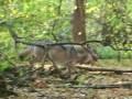 wolvenschade