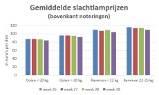 Grafiek met gemiddelde slachtlamprijzen in de weken 36 t/m 39 2019