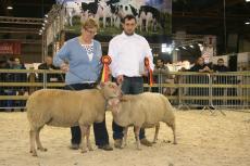 Nationale prijskamp schapen tijdens Agribex in België