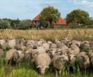 Beatrixhoeve - verloting van vakantiewoningverblijf onder deelnemers online kennisevent Het Schaap en GD