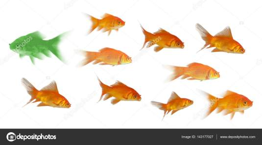 3D Side view of fish swimming against white background