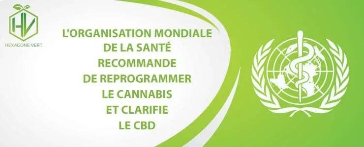 L'OMS recommande de reprogrammer le Cannabis et clarifie le CBD