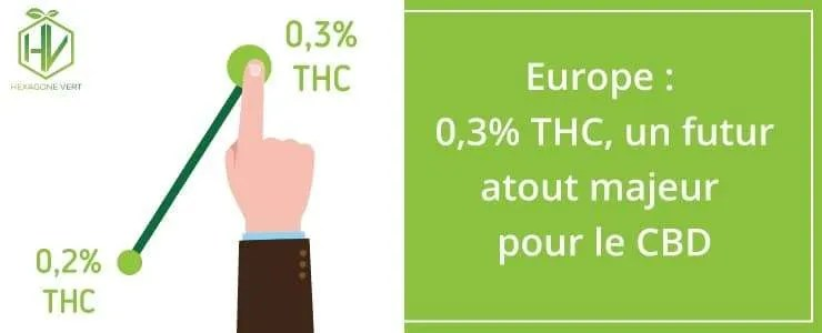 Europe : 0,3% de THC un futur atout majeur pour le CBD