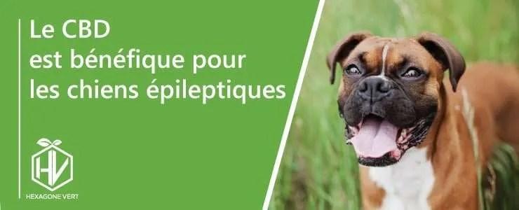 Le CBD est bénéfique pour les chiens épileptiques