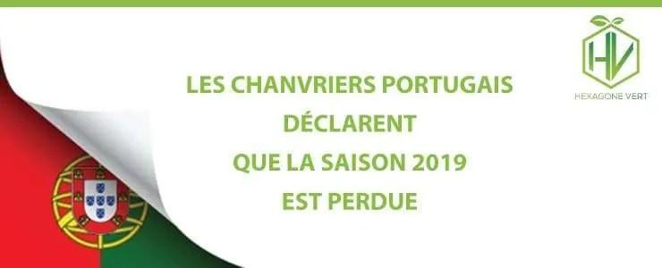 Les chanvriers portugais déclarent que la saison 2019 est perdue