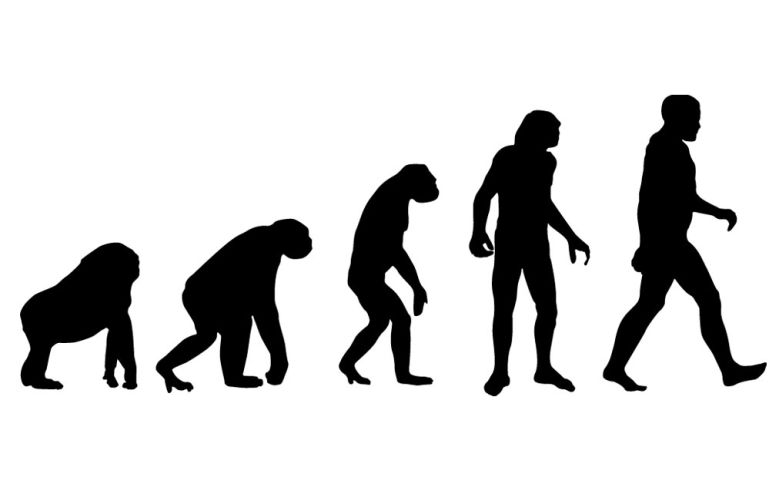 Fossils Reveal That Human-Gorilla Split Occurred 10