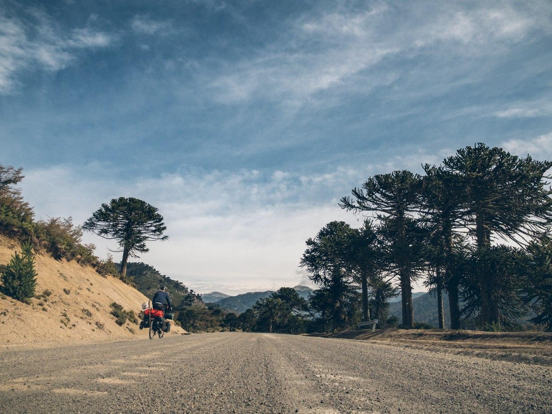 Araucarias Montagnes et Bonheur