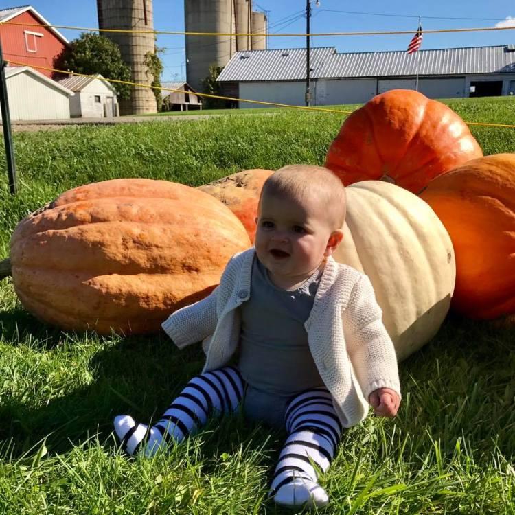 heidis farm stand pumpkin patch june and january