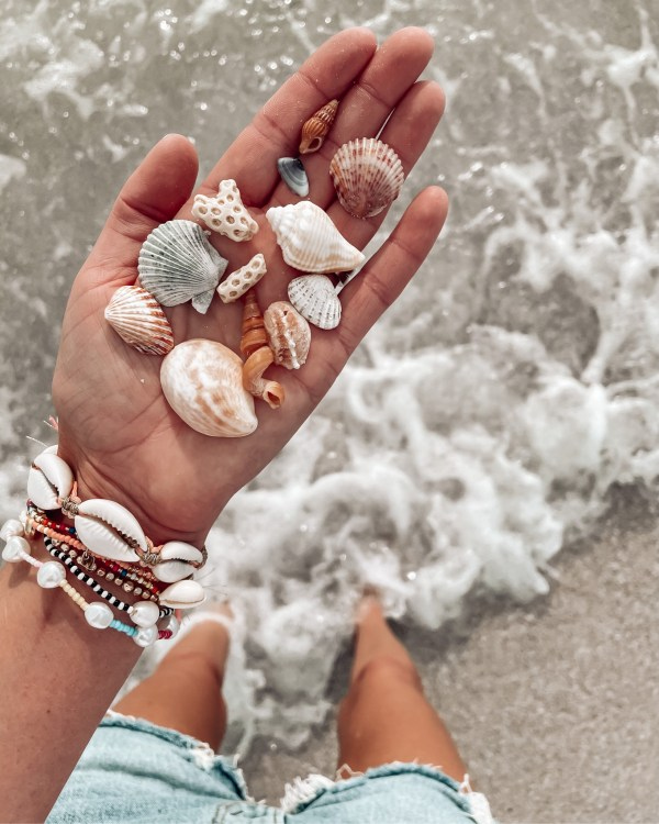 shelling in southwest florida