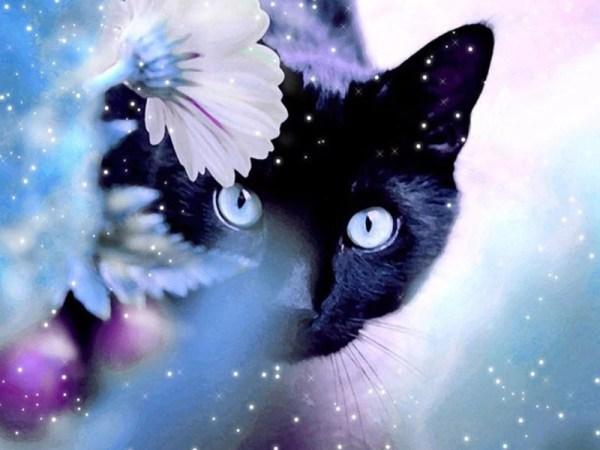 Broderie diamant Chat Noir aux yeux bleus
