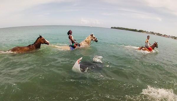 Healing with Horses, Tobago