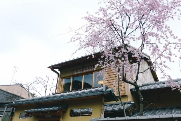 Kyoto in Spring (2016)
