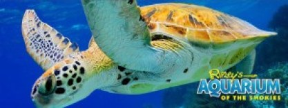 ripleys-aquarium-logo-heysmokies